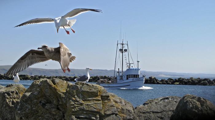 2. Bodega Bay