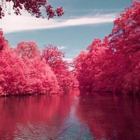 1. Cherry River