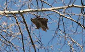 13. The Blue Ridge Parkway is home to 9 federally threatened or endangered species. One of those is the Southern Flying Squirrel...yes, they do exist!