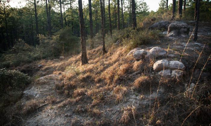 7. High Ridge Trail, Kisatchie Hills Wilderness Area, Kisatchie Ranger District