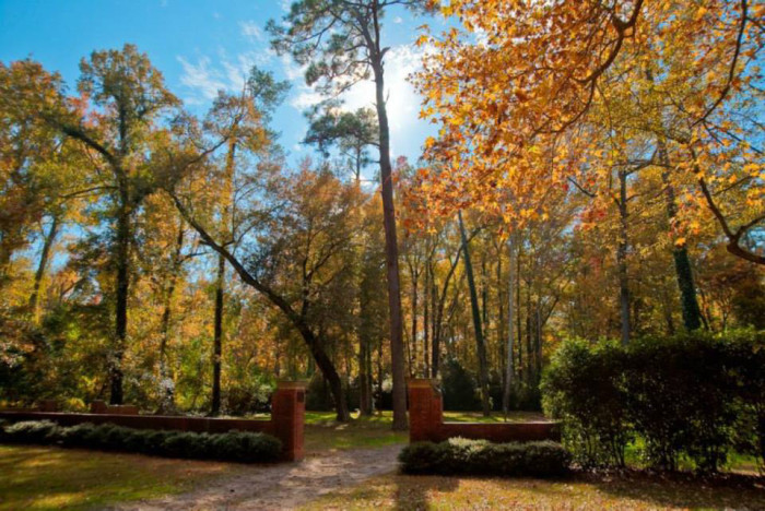 8. Take a hike in Aiken at Hitchcock Woods.