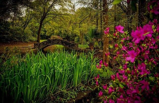 6. The surrounding areas to Bird City, known as Jungle Gardens, is home to an amazing variety of flora.