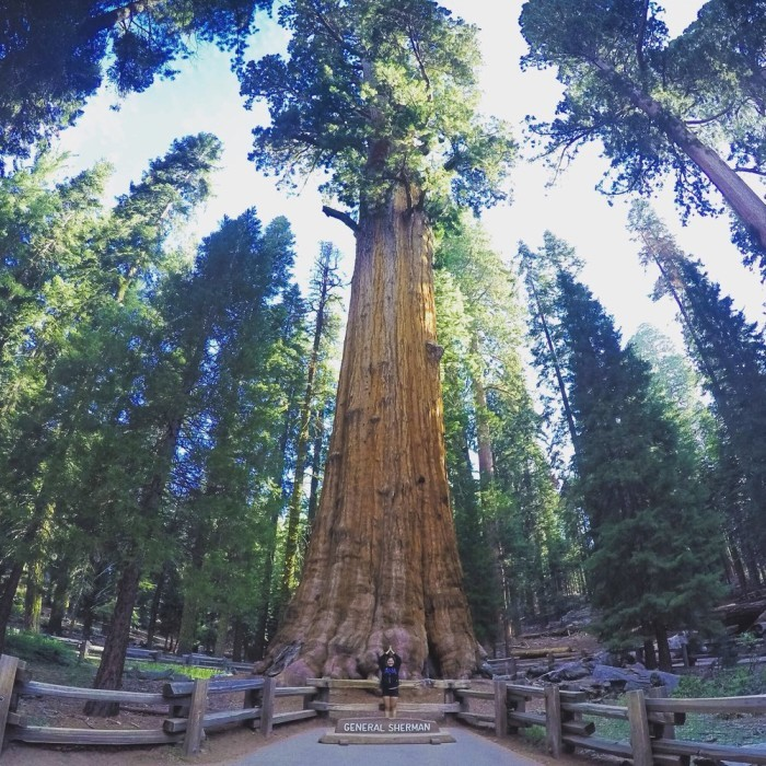 4. Sequoia National Park
