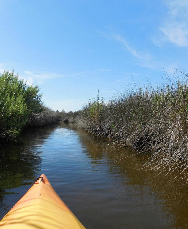 The park offers over 30 miles of water trails perfect for canoeing or kayaking.