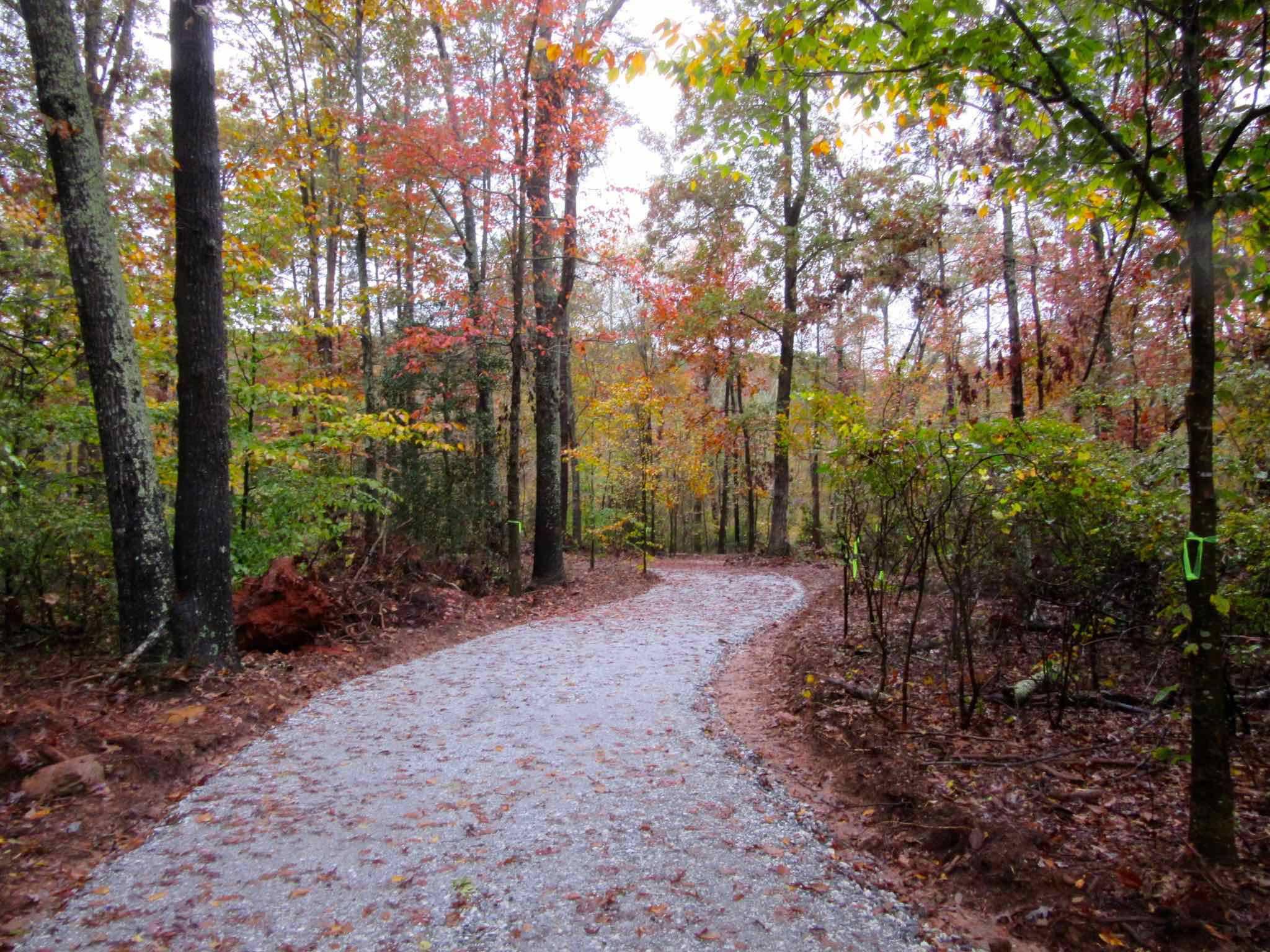12 Easy South Carolina Hikes Anyone Can Take