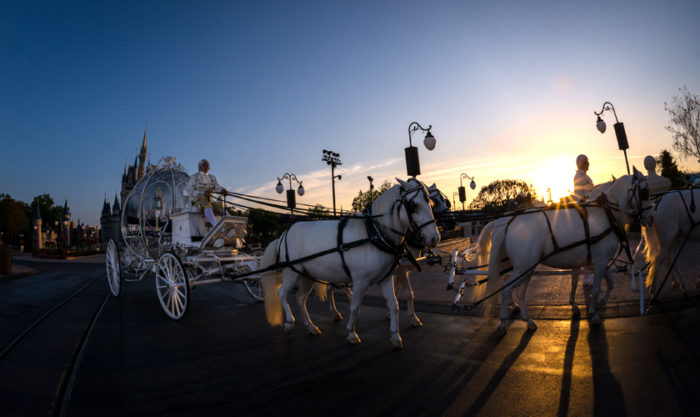 mk-wedding-horse1-840x500
