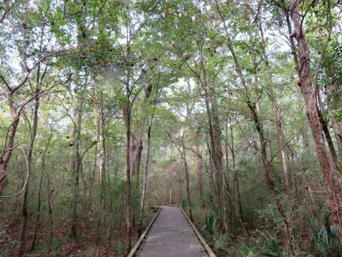 10. Acadiana Park Nature Station, Cost: Free