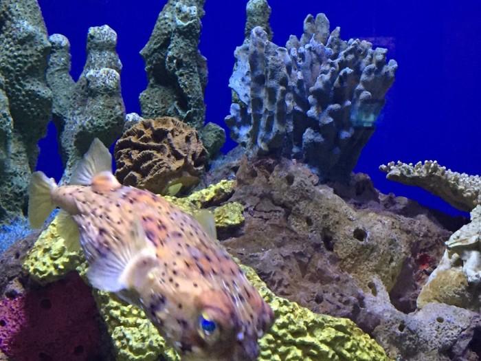 1) Aquarium of the Americas, 1 Canal St.