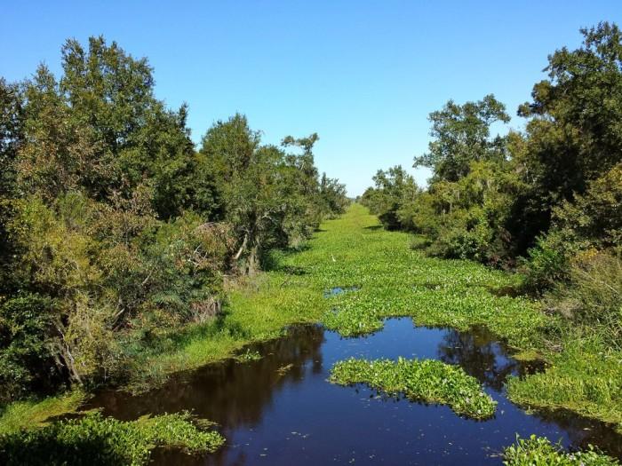5) Jean Lafitte National Wildlife Preserve, 6588 Barataria Preserve Pkwy
