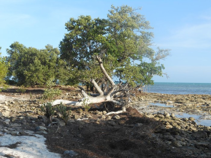 Beach beach in Key West - Review of Fort Zachary Taylor