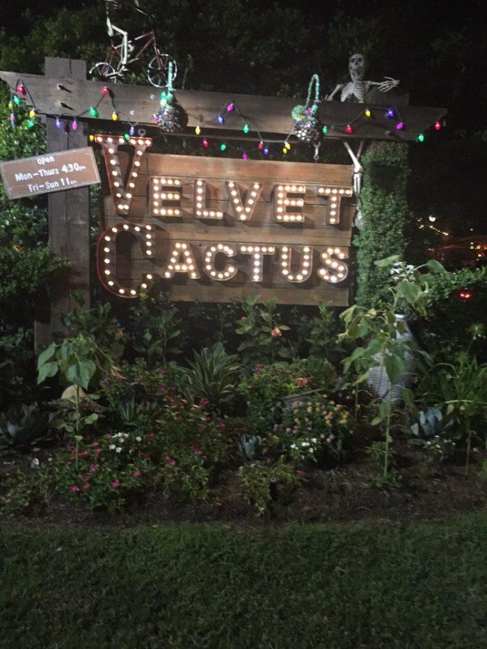 6) Velvet Cactus, 6300 Argonne Ave