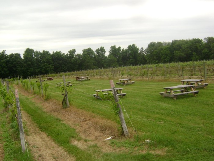 Rustic on the outside, charming on the inside. Connecticut's oldest vineyard is going strong.