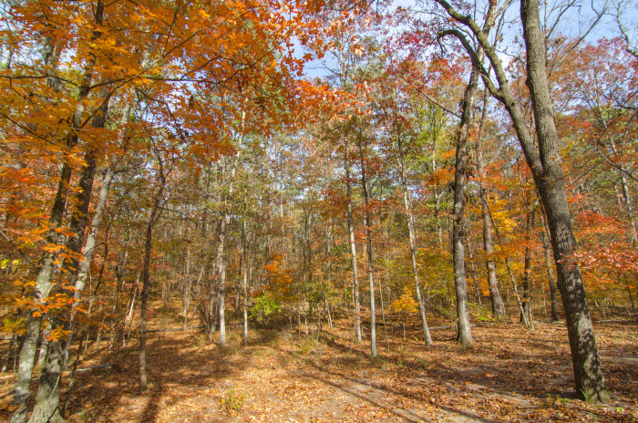 9. Lakeview Lodge Trail at Beaver's Bend State Park, Broken Bow