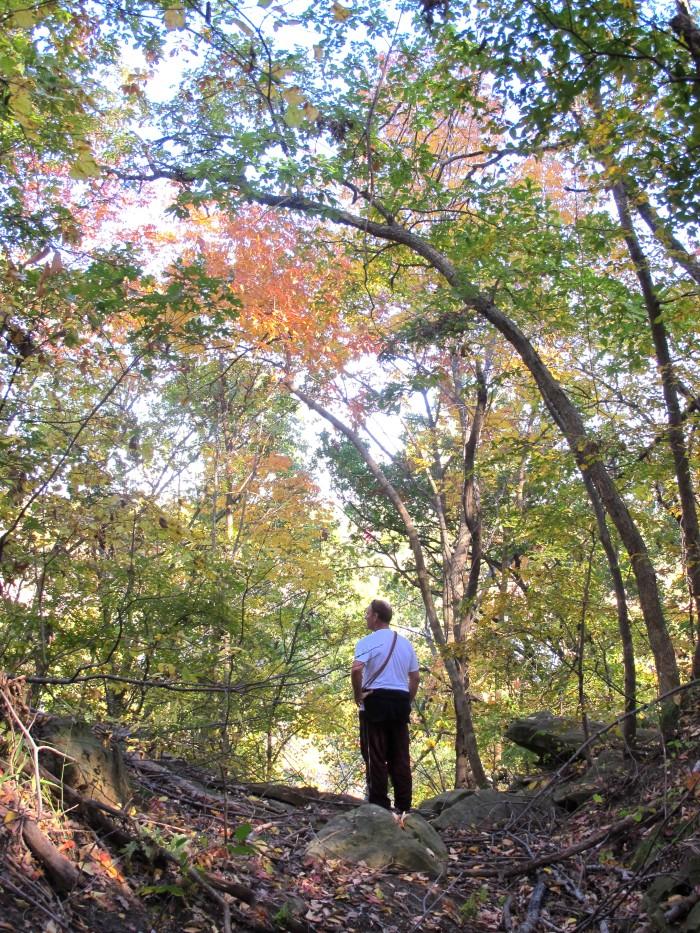 2. Yellow Trail at Turkey Mountain, Tulsa