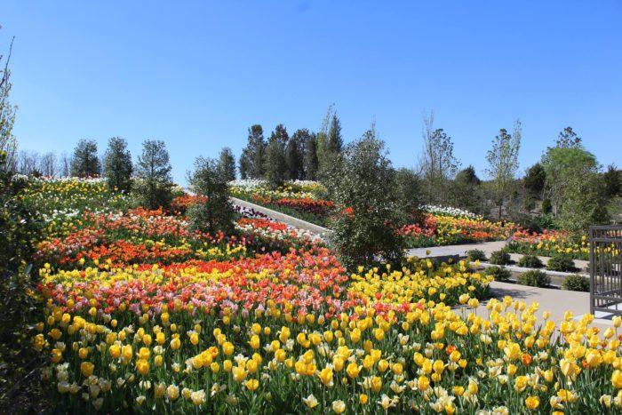 Beau Tulsa Botanic Garden, Tulsa