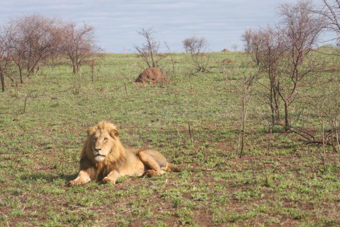 1. Tiger Safari Park, Tuttle