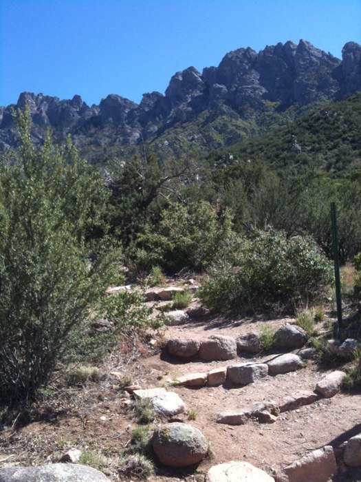 5. Pine Tree Trail, Aguirre Springs Recreation Area