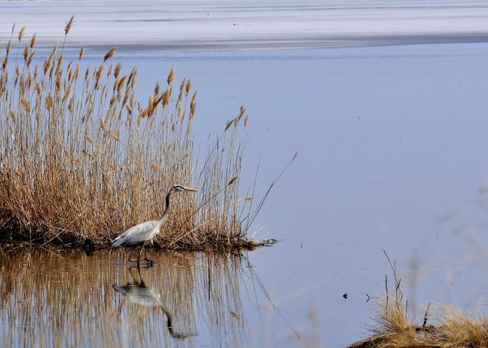 9. Prime Hook National Wildlife Refuge, Milton