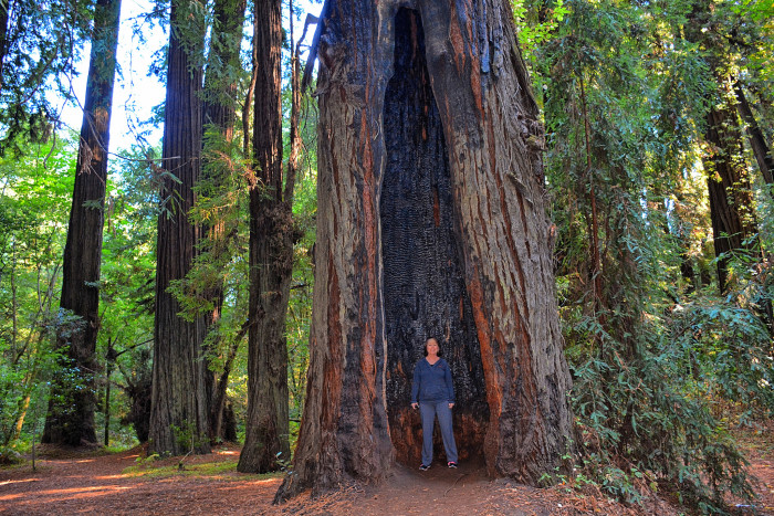 15 Best Photography Destinations In Northern California