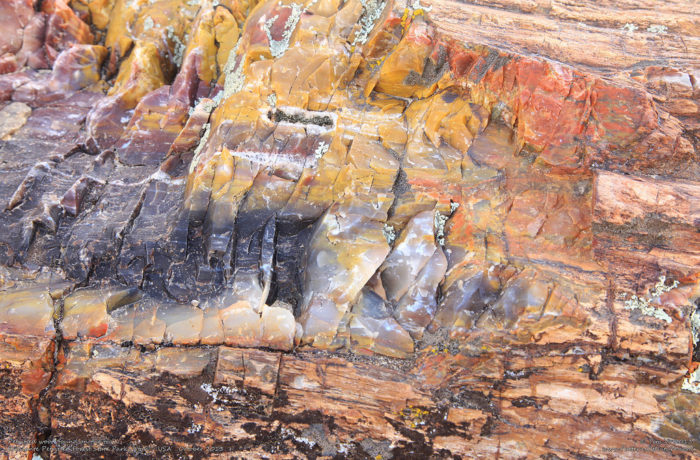 7. The petrified wood is gorgeous.