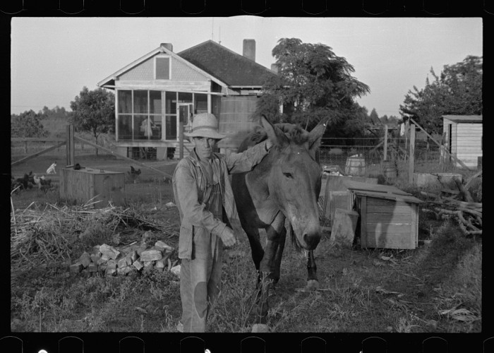 13. Tenant Farmer with Mule, September 1940