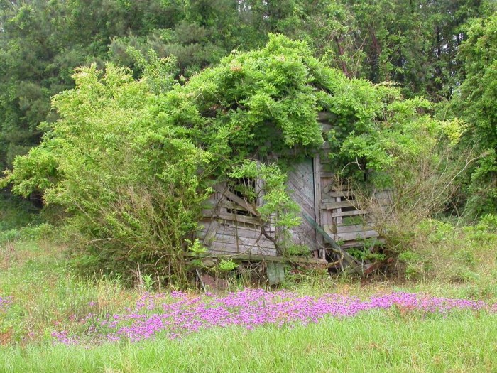 """14. This photo gives a whole new meaning to the word """"treehouse.""""  Abandoned and photographed at an undisclosed location in South Carolina."""