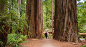 14 Reasons Why My Heart Will Always Be In Northern California