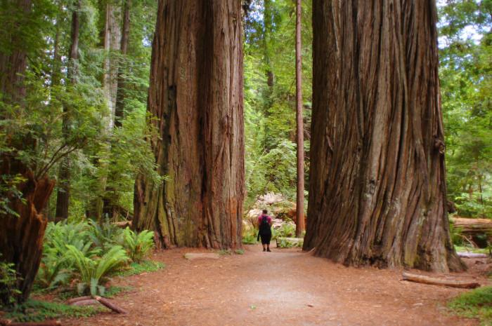 1. Redwood Trees