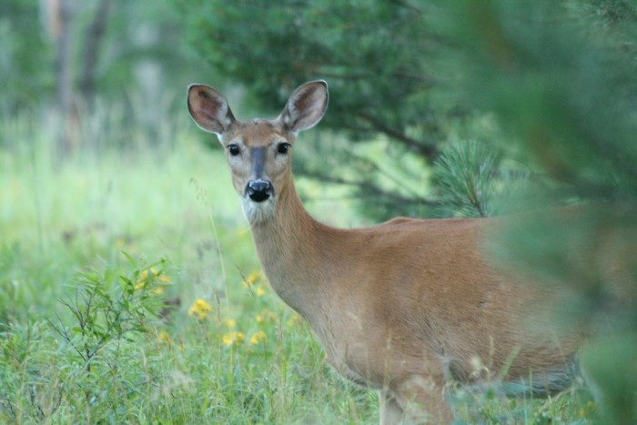 14. Wildlife is such a huge part of the state, and there's nothing like spotting deer in your yard as you are letting the dog out in the morning.