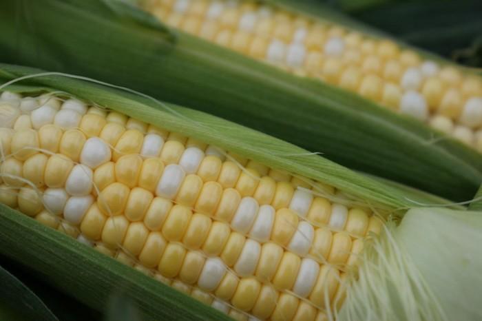 6. No corn tastes better than fresh Illinois corn.