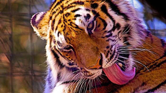 11. Brandywine Zoo, Wilmington