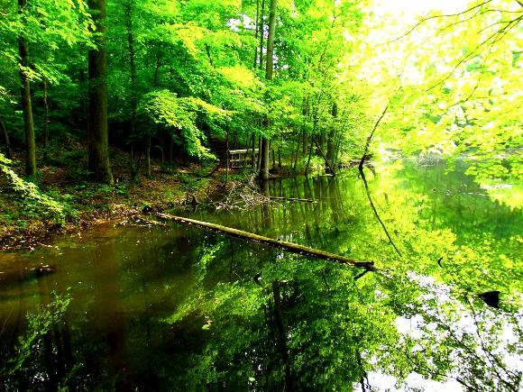 3. Harmonie State Park