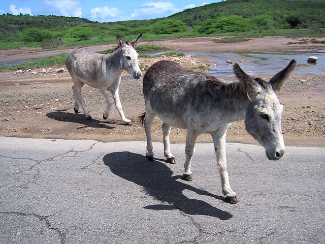 1.  You cannot legally bring your donkey or mule onto a trolley in Pittsburgh. That probably goes for the bus, the subway, and the parkway, too.