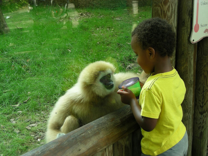 10. Let the kiddos run wild at the Knoxville Zoo.
