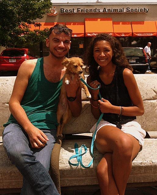 6. Adopt a homeless pet.