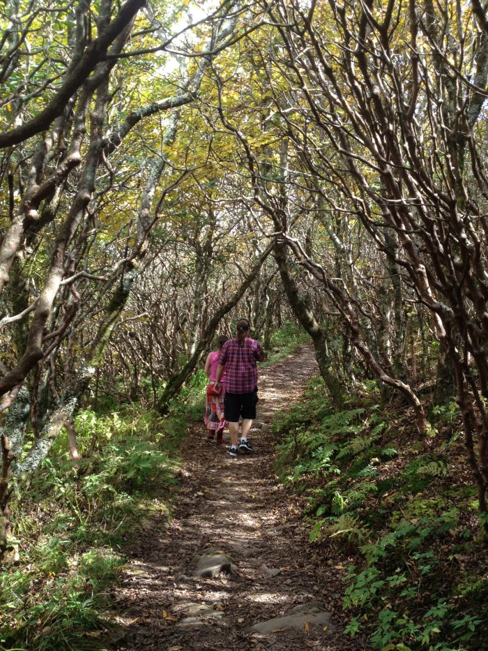 7. Craggy Gardens is nothing short of a fairytale, and with rhododendron blooms lining the trails and overlook, it's perfect for an early summer hike.