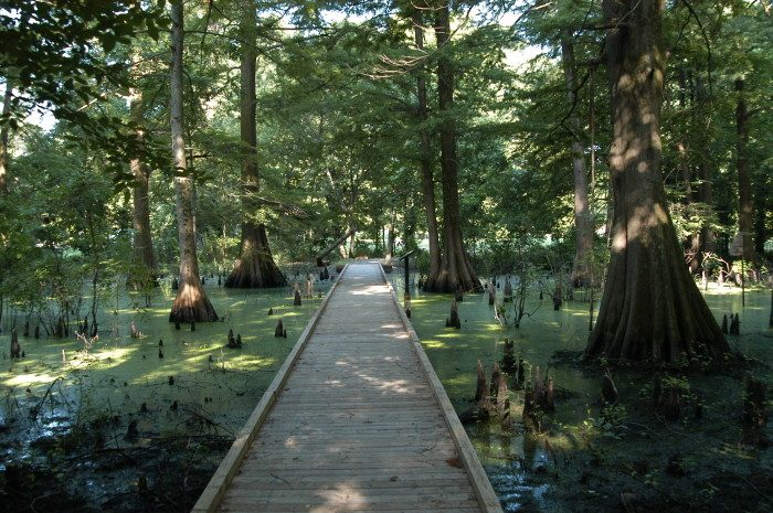 16. Mississippi: The Greenville Cypress Preserve