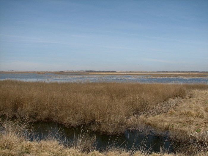 4. Cheyenne Bottoms Preserve (Great Bend)