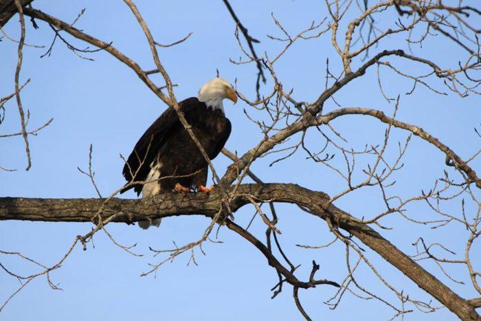 ...incredible wildlife sightings...