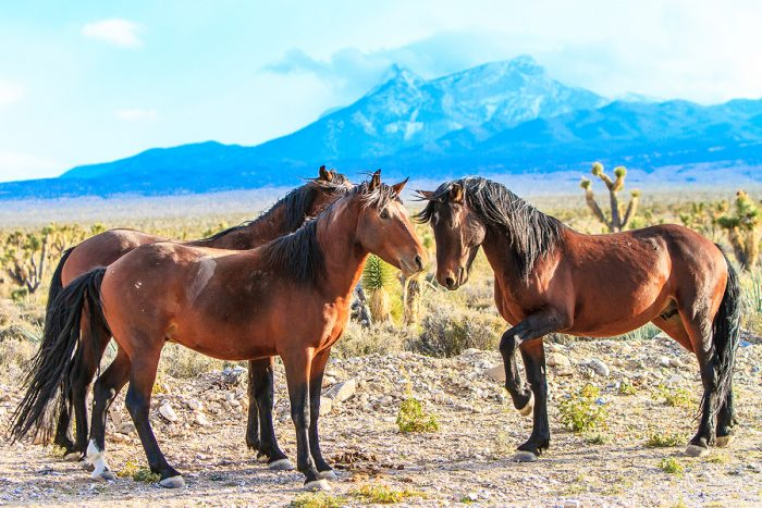 4. A trio of wild horses are interacting with each other in Cold Creek. This is such a sweet moment!