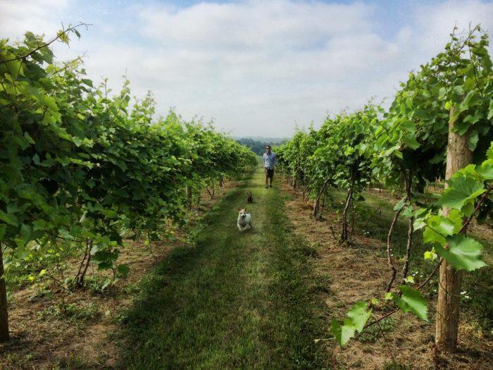 11. Visit a local vineyard.