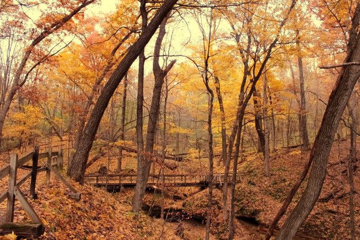 Iowa:  Wildcat Den State Park