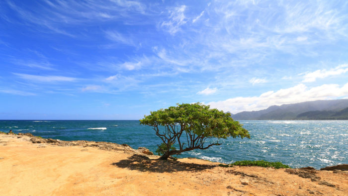 11. Laie Point State Wayside
