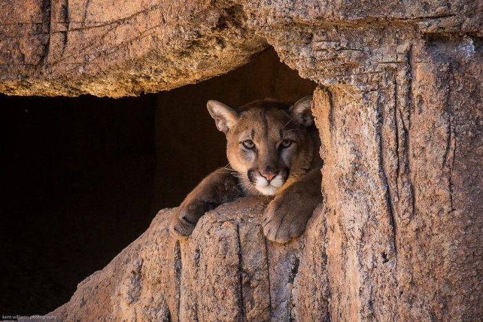 2. Mountain lion country