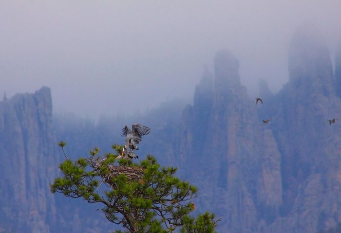 2. Foggy days in South Dakota make everything a bit more magical.