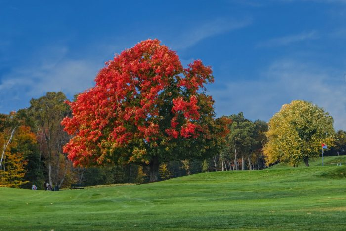 15. Though this picture of Oak Hill in Fitchburg may look like it's been run through Photoshop, that's just all-natural Massachusetts autumn beauty at work.