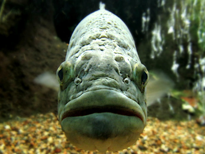 2. The official state fish is the largemouth bass.