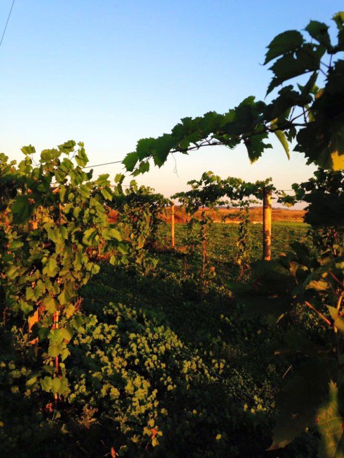 1. 4e Winery - Mapleton