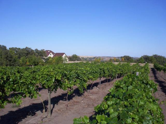 6. Pointe of View Winery - Burlington