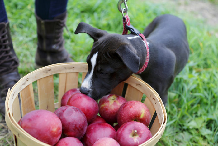 9. And picking your own fresh, crisp apples.
